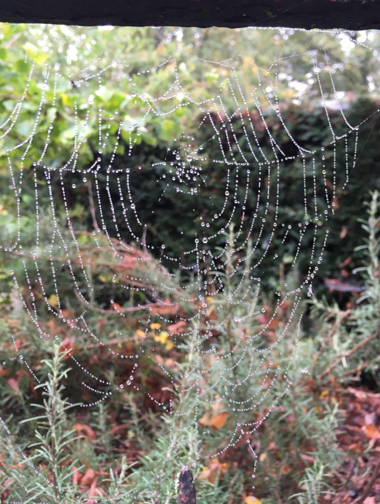 spider webs covered with dew